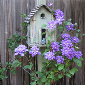 Pretty birdhouse with beautiful Clematis