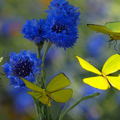 Awesome blue flowers and butterflies