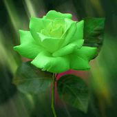 Awesome Green Rose
