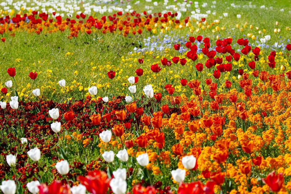 A field of spring flowers
