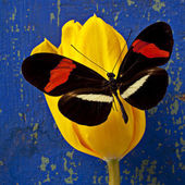 Beautiful butterfly on yellow tulip