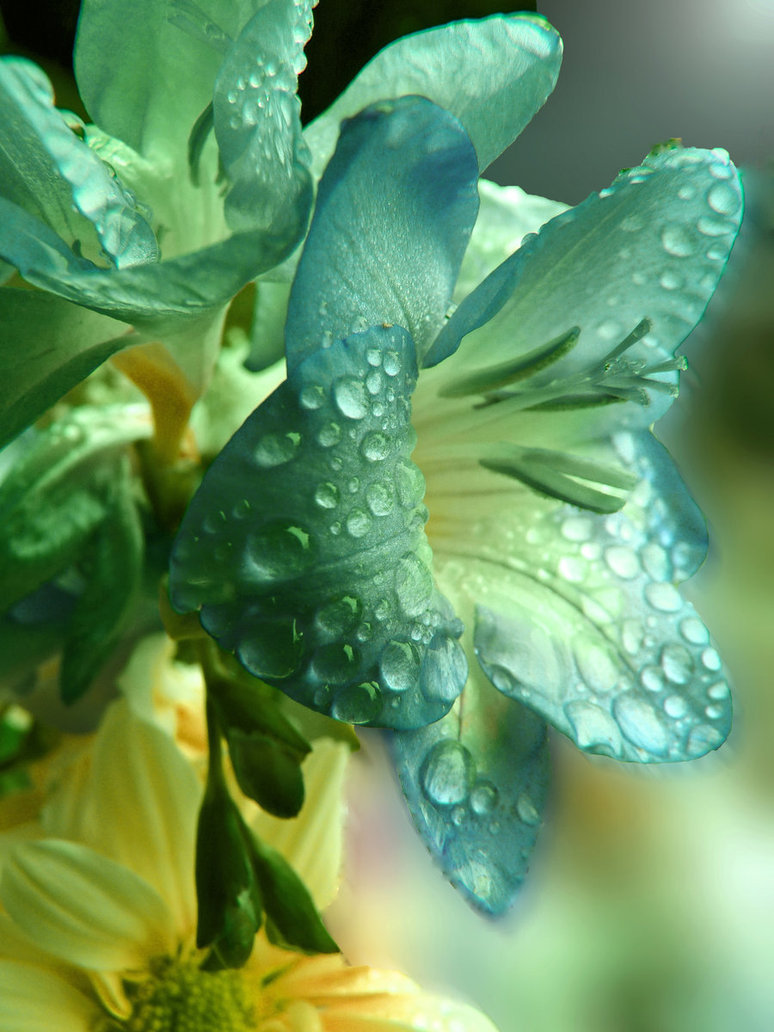 Raindrops on flowers
