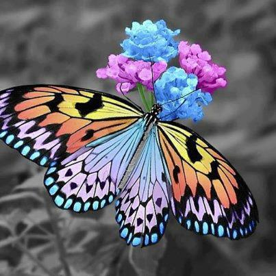 Beautiful butterfly on colorful flowers