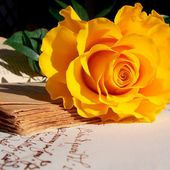 Yellow rose and ancient book
