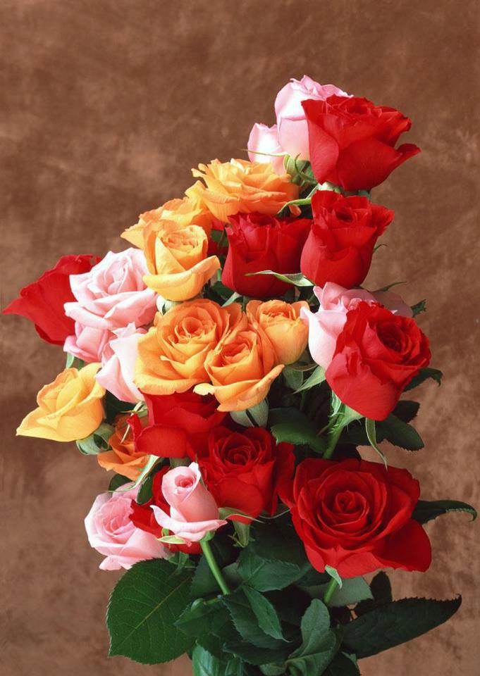 Red, Orange and Pink roses