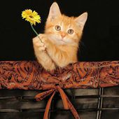 Meow! I brought you a flower!