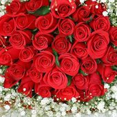 Huge bunch of red roses
