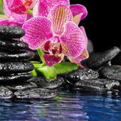 Pink orchid on stones