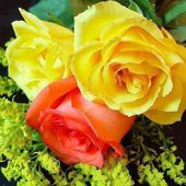 Two yellow and one red roses