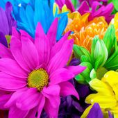 Bright, Vivid, Colorful Flowers
