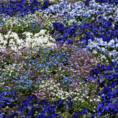 Flower bed of annuals at Botanical Garden