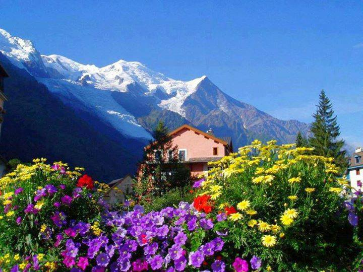 Beautiful alpine flowers, Switzerland