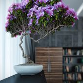 Purple bonsai tree