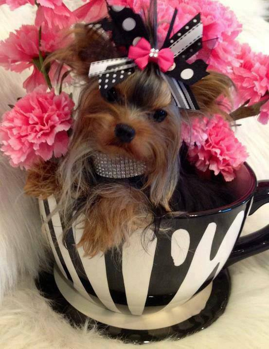Yorkie in flowers