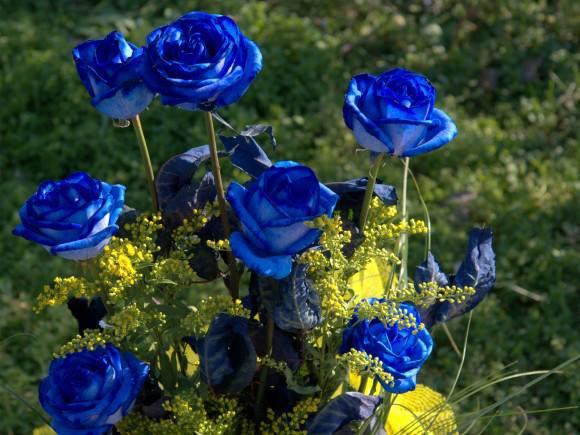 Amazing blue roses - photo#16