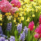 Colorful Spring Flowers