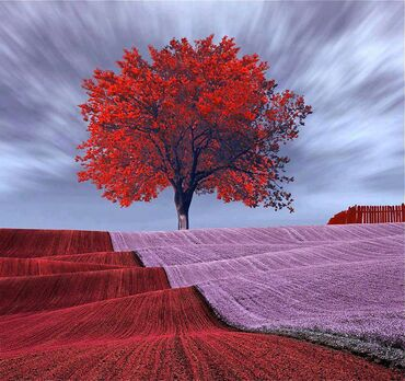 Terrific Red Tree