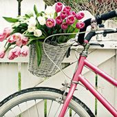 Pink bike with a basket
