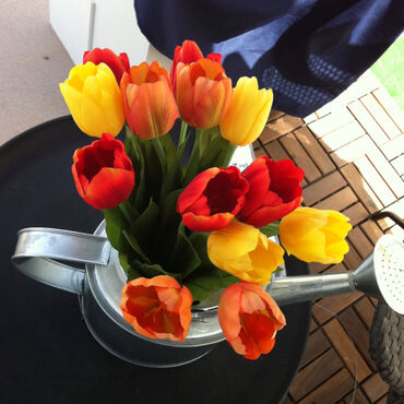 Bunch of fresh colorful tulips