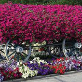 Beautiful wagon raised flower bed