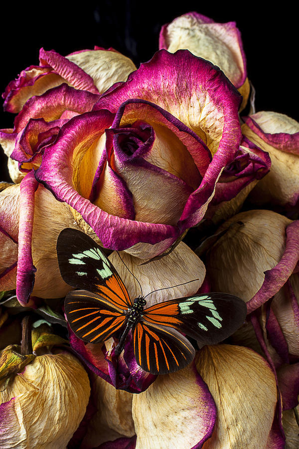Dried Rose And Butterfly