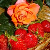 Orange rose and Strawberries