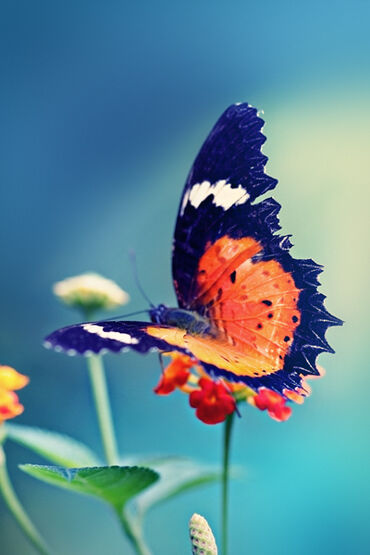 Beautiful colorful butterfly