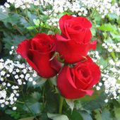 Three red roses