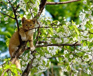 A kitty sitting up in a flowering tree