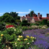 Roses and Lavender at Borde Hill Gardens