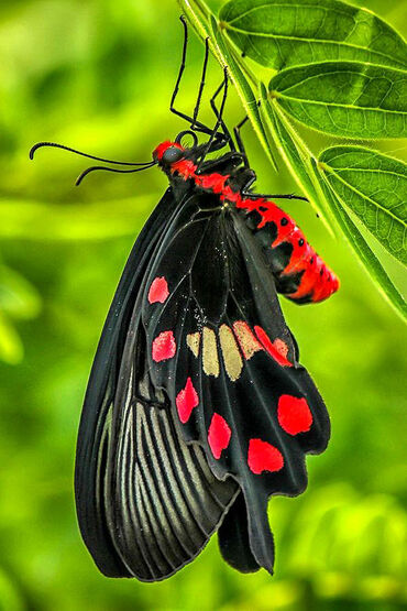 Amazing butterfly!