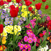 Your Best Spring Flower Garden