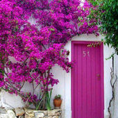 Bougainvilleas at the door