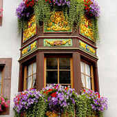 Flower Window Boxes