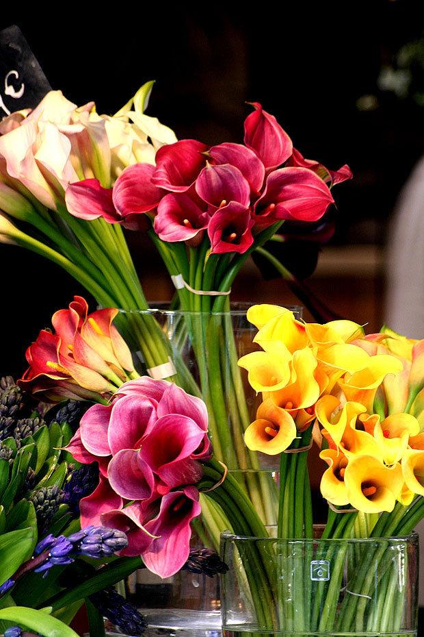 colorful calla lillies