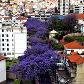 Funchal, Madeira, Portugal