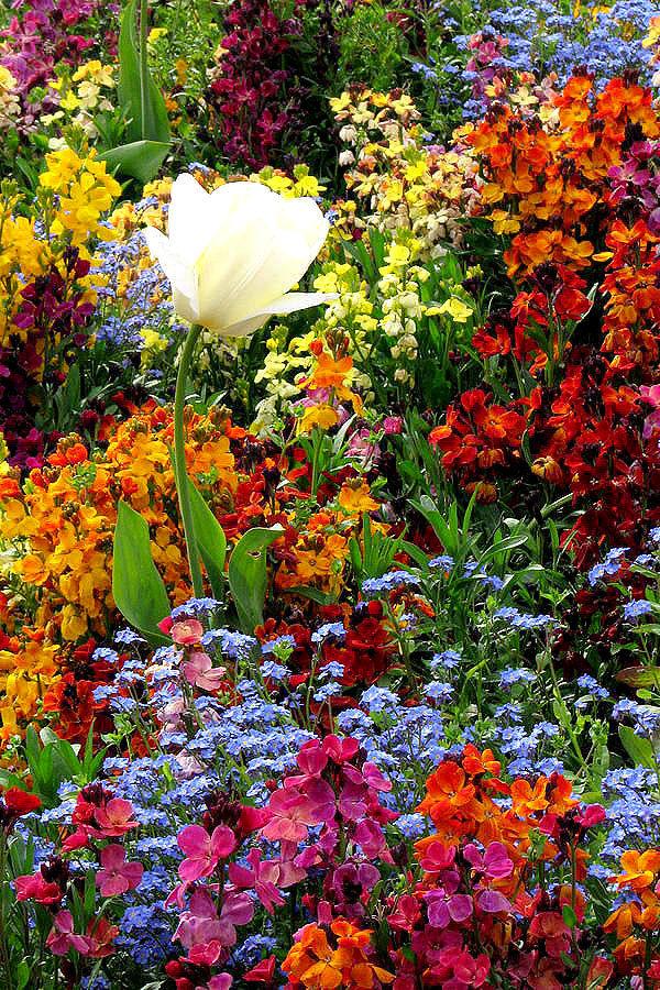 Perfect Flower Garden