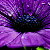 Purple flower with dew drops
