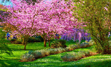 Cherry blossom inside garden of Ninfa, Italy