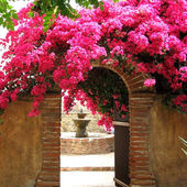 An arch smothered in hot pink Bougainvillea