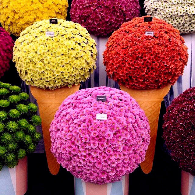 Colorful Flower Balls