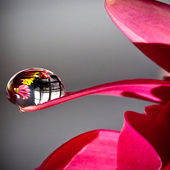 Flower with Water Drop