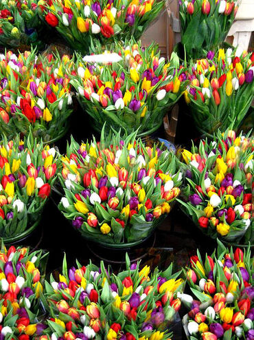 Bunches of colourful tulips