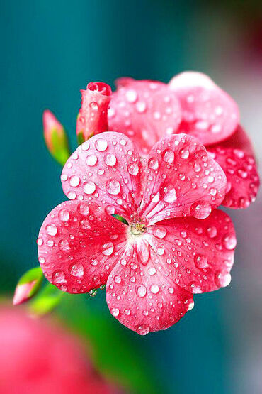 Droplet Flowers