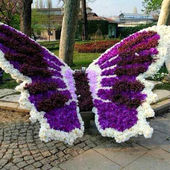 Beautiful butterfly, Art Garden