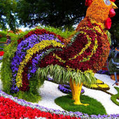 Rooster of flowers topiary