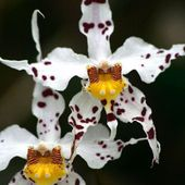 Spectacular orchid flowers