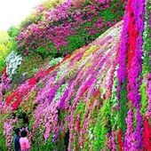 Japan beauty flower garden
