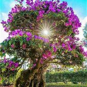 Beautiful Flowering Tree