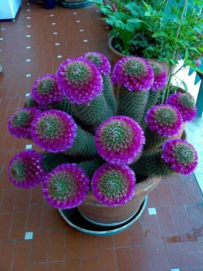 Beautiful cactus